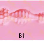 Irontech Vagina inner B1